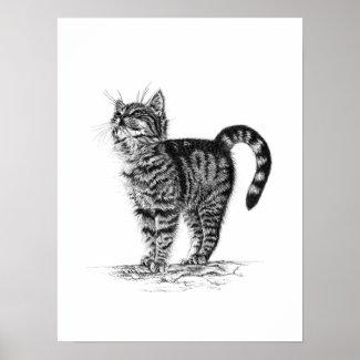 Tabby Kitten Poster print