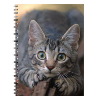 Tabby Kitten Scratching Post - Cat Photography Note Books