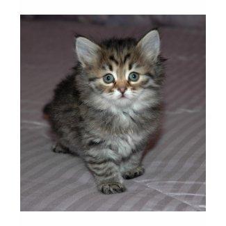 Tabby Kitten Shirt shirt