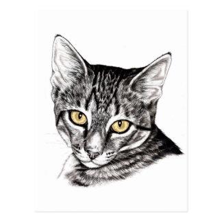 Tabby Kitten Sketch Postcard
