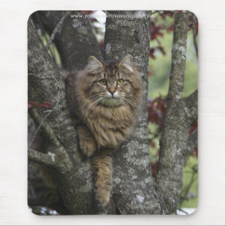 TABBY KITTEN up a Tree Mousepad