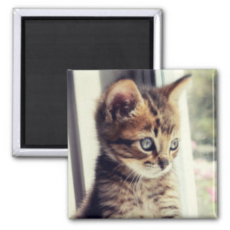 Tabby Kitten Watching Out Window 2 Inch Square Magnet