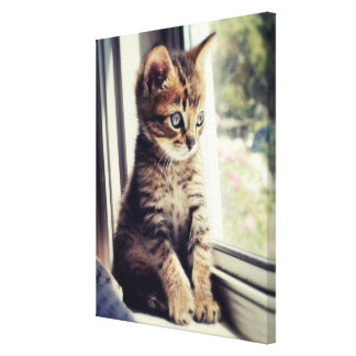 Tabby Kitten Watching Out Window Canvas Print