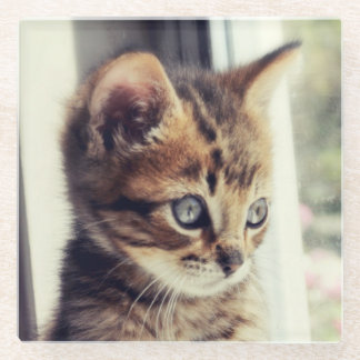 Tabby Kitten Watching Out Window Glass Coaster
