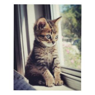 Tabby Kitten Watching Out Window Panel Wall Art