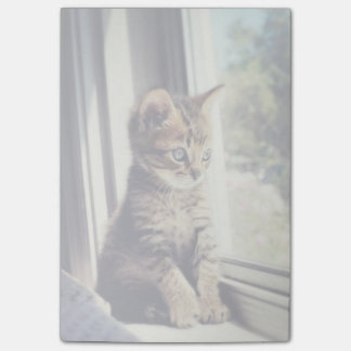 Tabby Kitten Watching Out Window Post-it® Notes