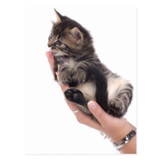 tabby kitten who licks tarjeta postal