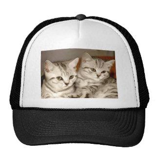 Tabby Kittens Cap