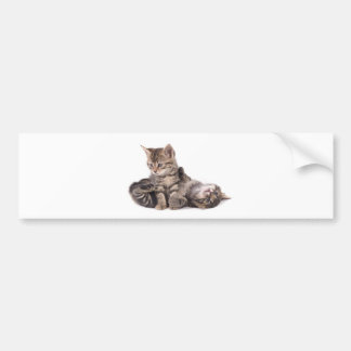 tabby kittens playing car bumper sticker
