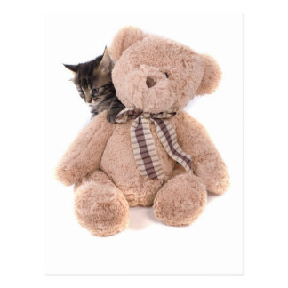 tabby kittens playing with has teddy bear postcard