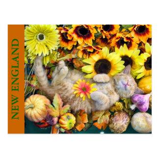Tabby Kitty Cat Kitten w/ Pumpkins, Squash, Gourds Postcard
