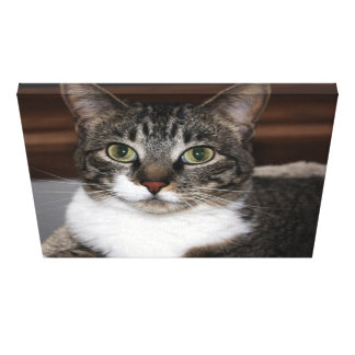 Tabby Kitty Cat Looking at You Photo Canvas Print