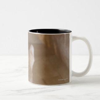 Tabby Mugs