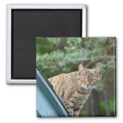 Tabby on Roof 2 Inch Square Magnet