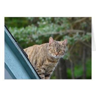 Tabby on Roof Card