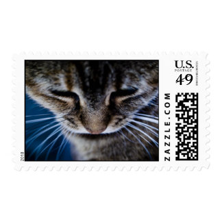 Tabby Postage