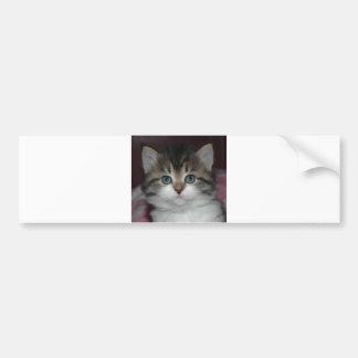 Tabby siberiano gatito blanco pegatina de parachoque