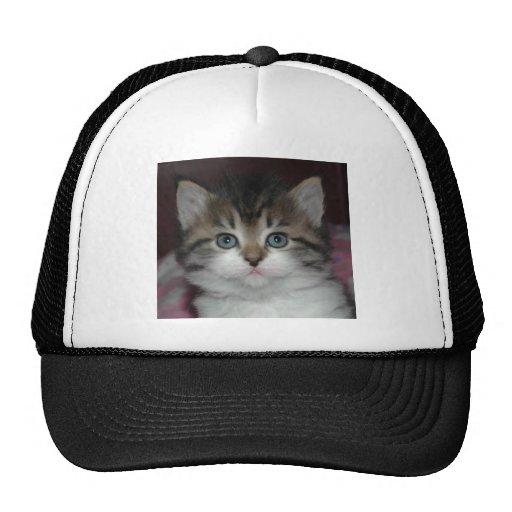 Tabby siberiano/gatito blanco gorras de camionero