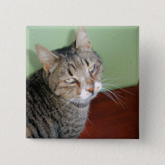 Tabby Time Button