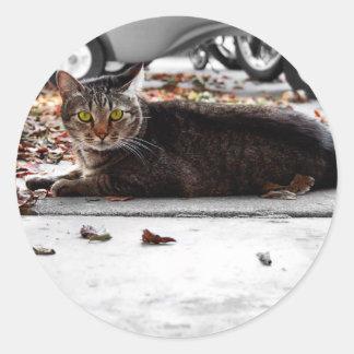 Tabby Tom Cat Classic Round Sticker