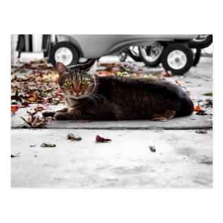 Tabby Tom Cat Postcard