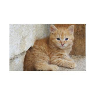 Tabby Tomcat Kitten Canvas Print