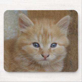 Tabby Tomcat Kitten Mouse Pad