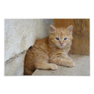 Tabby Tomcat Kitten Photo Print