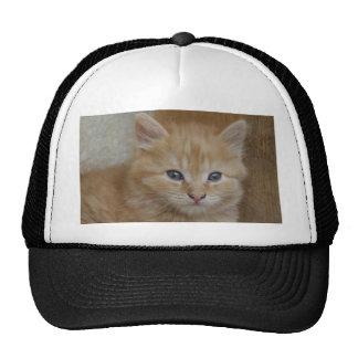 Tabby Tomcat Kitten Trucker Hat