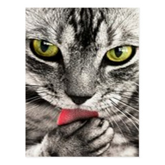 Tabby Tongue Postcard