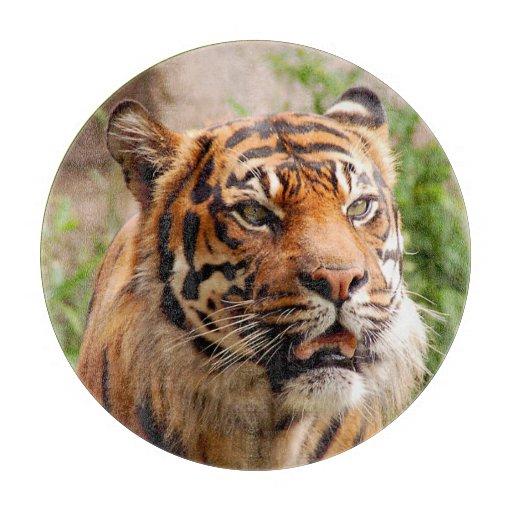 Tabla de cortar hermosa de la cara del tigre