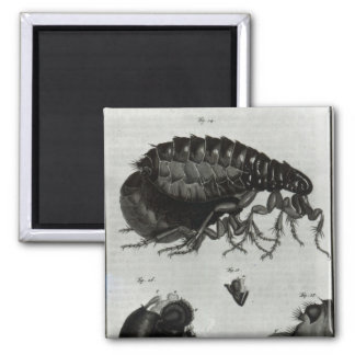 Table IV of Flies and Fleas Magnet