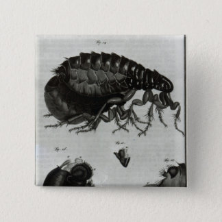 Table IV of Flies and Fleas Pinback Button