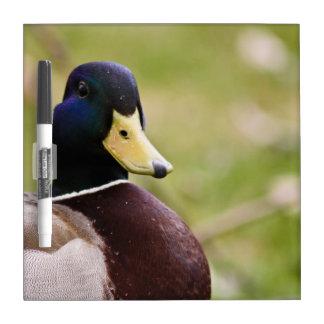 Tablero amarillo y azul del Seco-Borrado del pato Pizarras Blancas