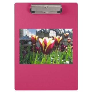 Tablero colorido de los tulipanes de la ciudad