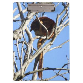 Tablero del canguro de árbol