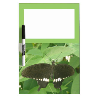 Tablero mormón común de la nota de la mariposa tablero blanco