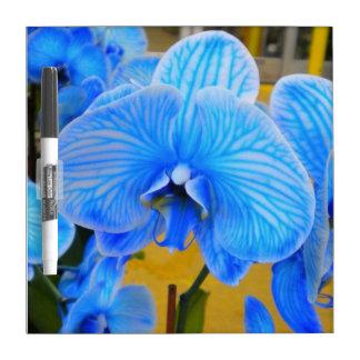 Tablero seco del borrado de la orquídea azul de la pizarra blanca