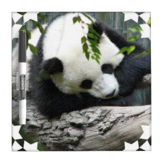 Tablero seco del borrado de la panda linda pizarras blancas