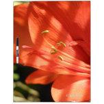 Tablero seco del borrado del Amaryllis 01 Pizarras Blancas De Calidad