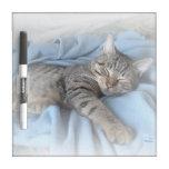 Tablero seco del borrado del gatito soñoliento (ta pizarra blanca