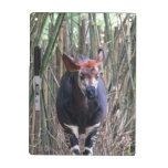 Tablero seco del borrado del Okapi Pizarra Blanca