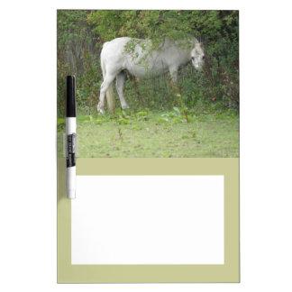 Tablero tímido de la nota del caballo blanco pizarras