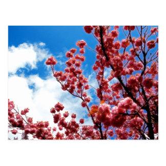 Tabor en la primavera 2 tarjetas postales