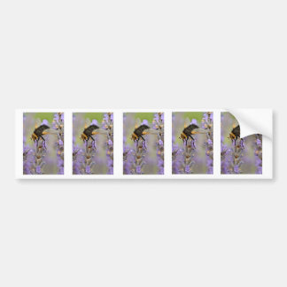 Tachyna fly on lavender flower bumper sticker