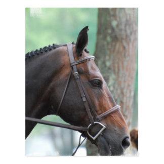 Tacked Dark Bay Horse Postcard