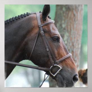 Tacked Dark Bay Horse Poster