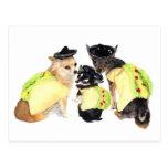 Taco Chihuahuas Postcard