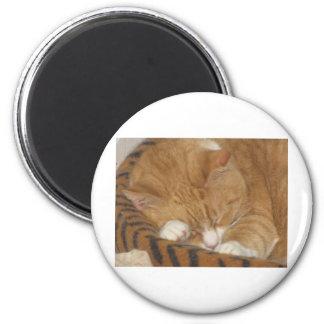 Taco the Siesta Cat 2 Inch Round Magnet