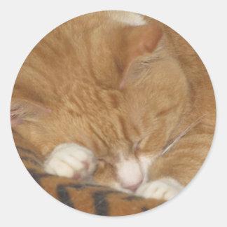 Taco the Siesta Cat Classic Round Sticker